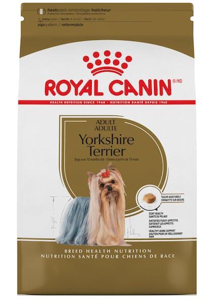 Yorkshire_Terrier_1