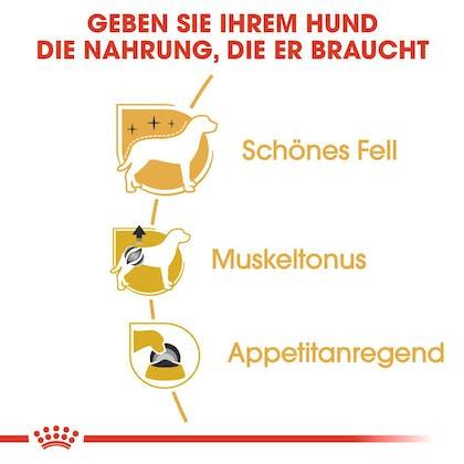 RC-BHN-Wet-Poodle-Feuchtnahrung_Vorteile_DE