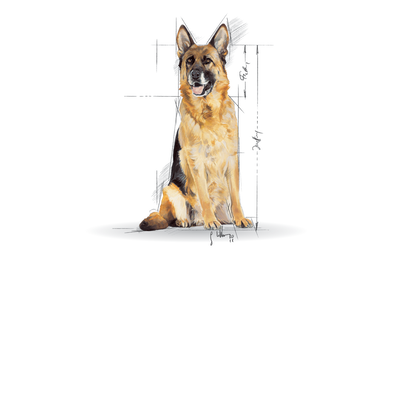 Medium Maxi Giant POS 2012 Illustrations - MA-AGE-SHN-ILLUSTR