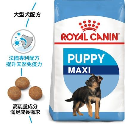 SHN_PuppyMaxi