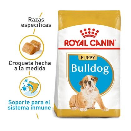 1 BULLDOG PUPPY INGLÉS COLOMBIA