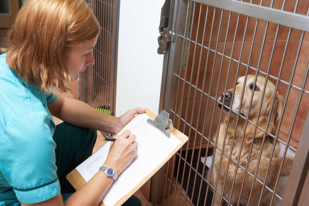 Pain assessment in the dog: the Glasgow Pain Scale
