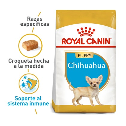 1 CHIHUAHUA PUPPY COLOMBIA