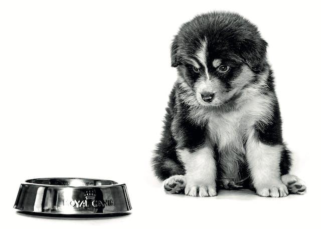 Puppy (3-12 months)