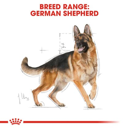 BHN-GermanShepherd-CV-Eretailkit-1