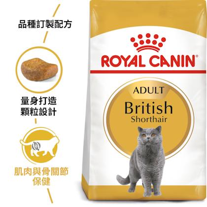 英國短毛成貓BS34_EC產品圖