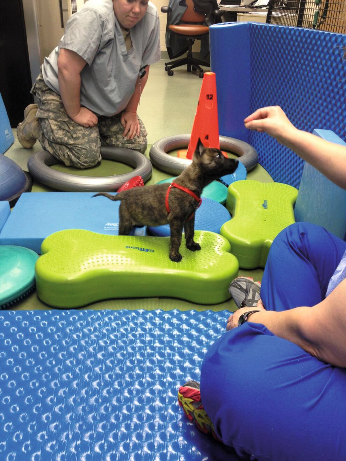 A five-week-old puppy learns to balance with her forelimbs elevated on soft, pliable materials.