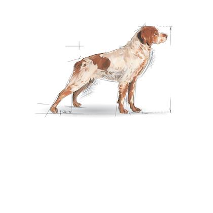 Medium Maxi Giant POS 2012 Illustrations - ME-AD7-SHN-ILLUSTR