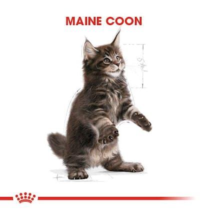 Royal Canin Maine Coon Kitten Yavru Kedi Maması 1