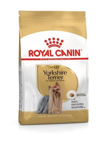 Yorkshire Terrier Adulto