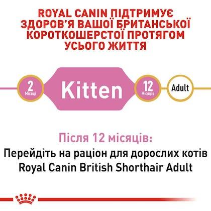 RC-FBN-KittenBritishShorthair_2-UA.jpg