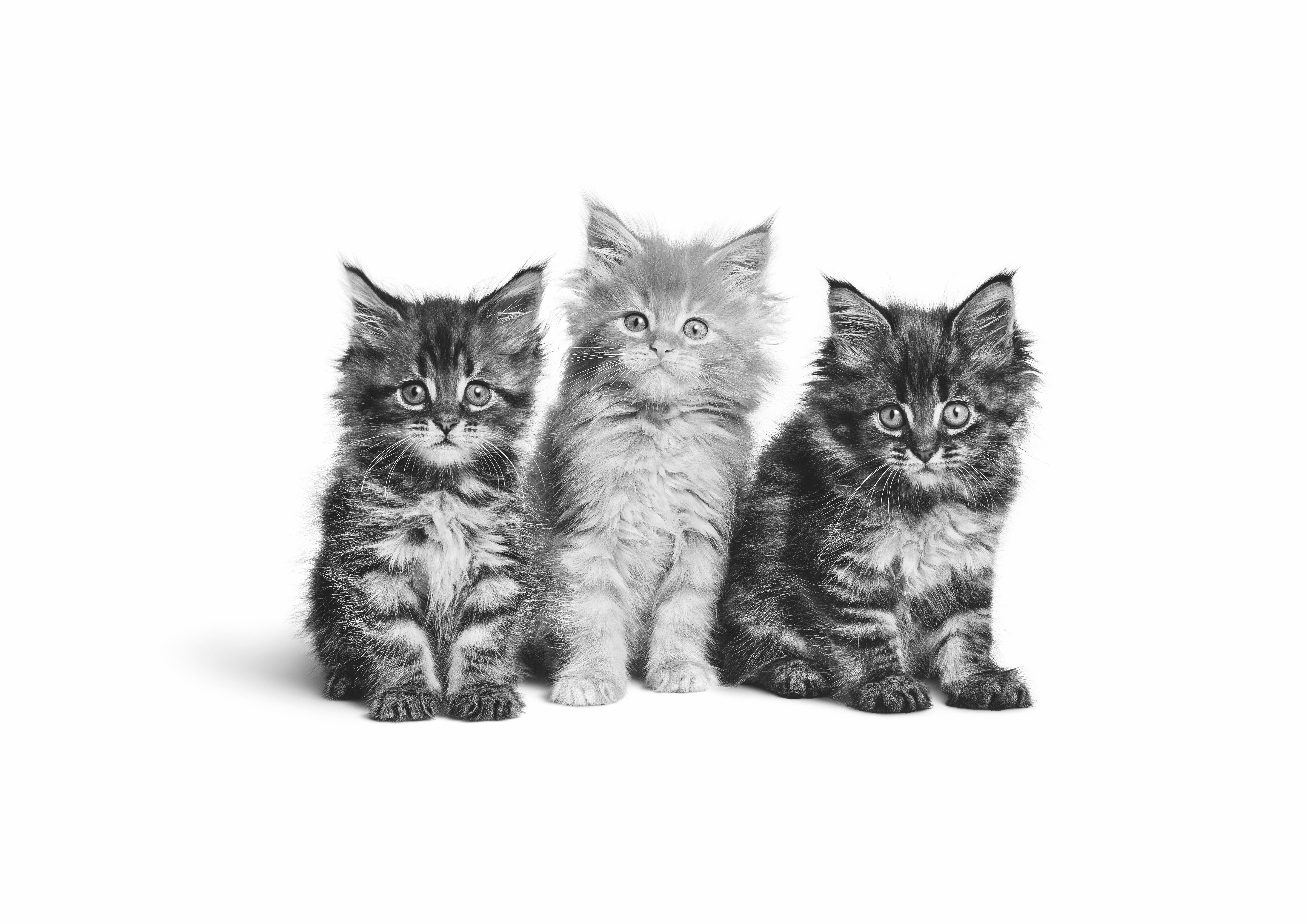 Cat & Kitten Food - Royal Canin