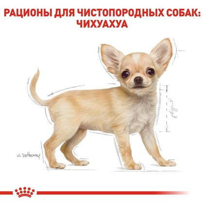 RC-BHN-PuppyChihuahua_5-RU.jpg