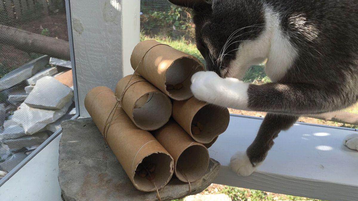 Juguetes dispensadores de comida para gatos