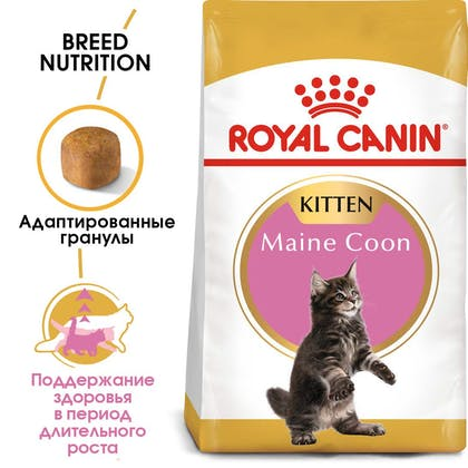 RC-FBN-KittenMaineCoon-MV-EretailKit_rus