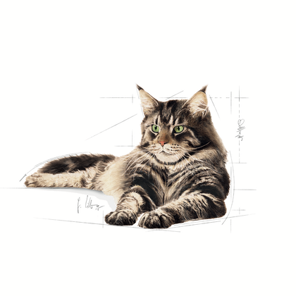 FBN2016_MAINE COON_FACING