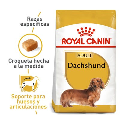 1 DACHSHUND COLOMBIA