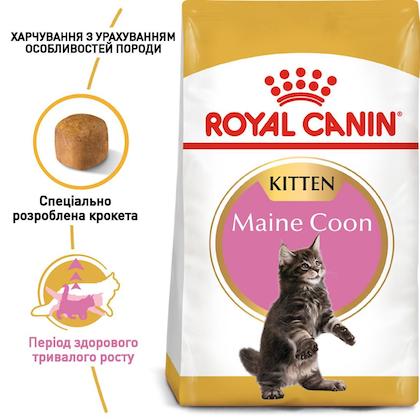 RC-FBN-KittenMaineCoon_1-UA.jpg