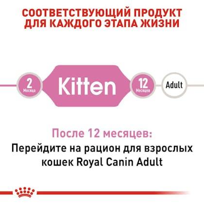 RC-FHN-Kitten_2-RU.jpg