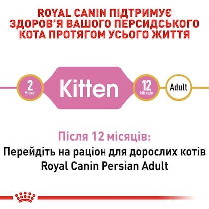RC-FBN-KittenPersian_2-UA.jpg