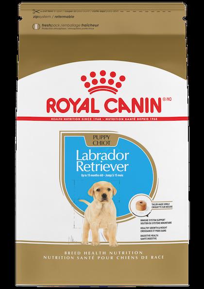 Labrador_Retriever_Puppy_1