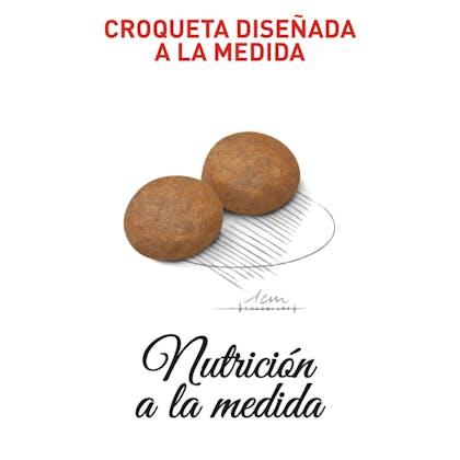 MEDIUM ADULT 7+ COLOMBIA 4