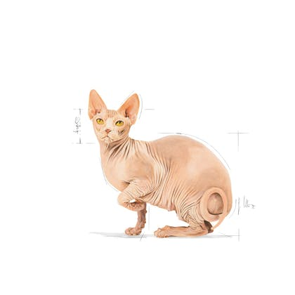 FBN2016_SPHYNX_BOTTOM