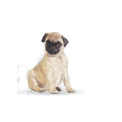 BHN 2012 - Part 1 - Emblematic pets pictures - PUG-JU-BHN-ILLUSTR