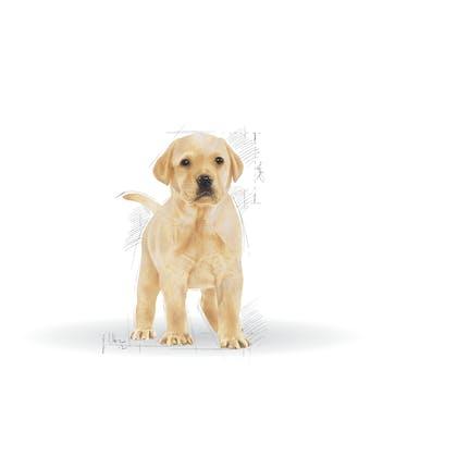BHN 2013 - Part 2 - Emblematic pets pictures - LAB-JU-BHN-ILLUSTR