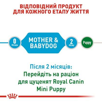 RC-SHN-PuppyMiniStarter_2-UA.jpg