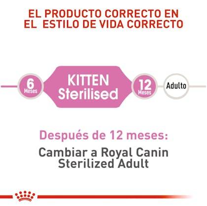 KITTEN STERILISED COLOMBIA 3
