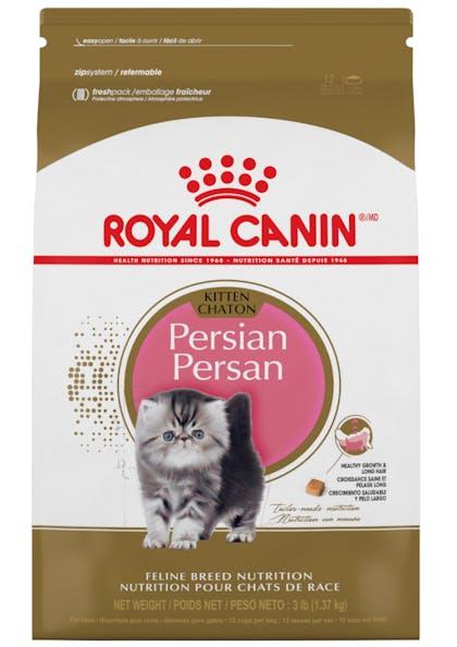 Persian_Kitten_1