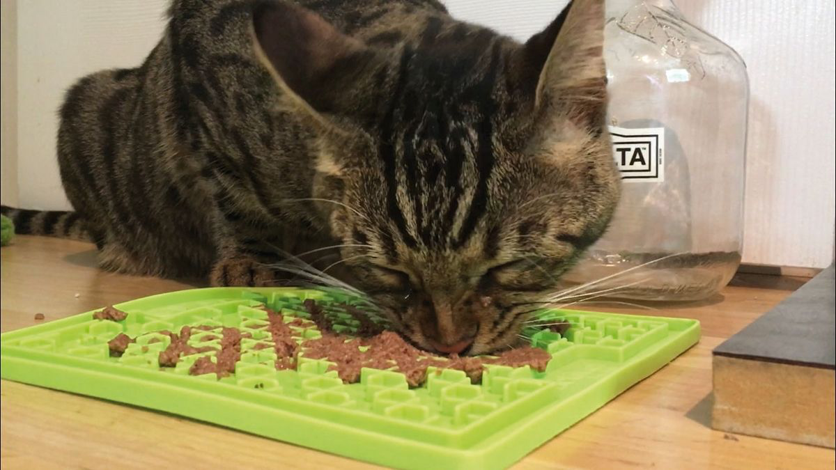 A commercially produced stationary puzzle that can be used for wet or dry cat food
