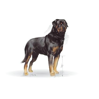 BHN 2013 - Part 2 - Emblematic pets pictures - ROT-AD-BHN-ILLUSTR