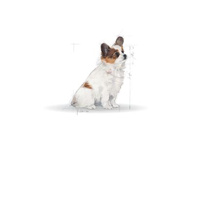 Medium Maxi Giant POS 2012 Illustrations - XS-JU-SHN-ILLUSTR