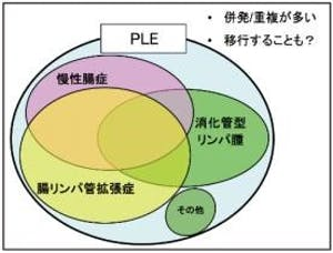 344-japan-local-ca-vet-ple