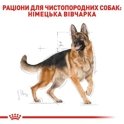 RC-BHN-GermanShepherd_2-UA.jpg