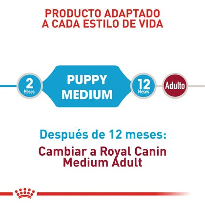 MEDIUM PUPPY COLOMBIA 3