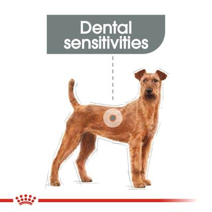 CCN-DentalMedium-CV-Eretailkit-1