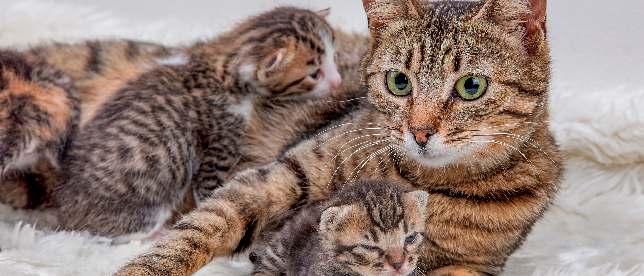 Helping your pregnant cat give birth at home - Royal Canin