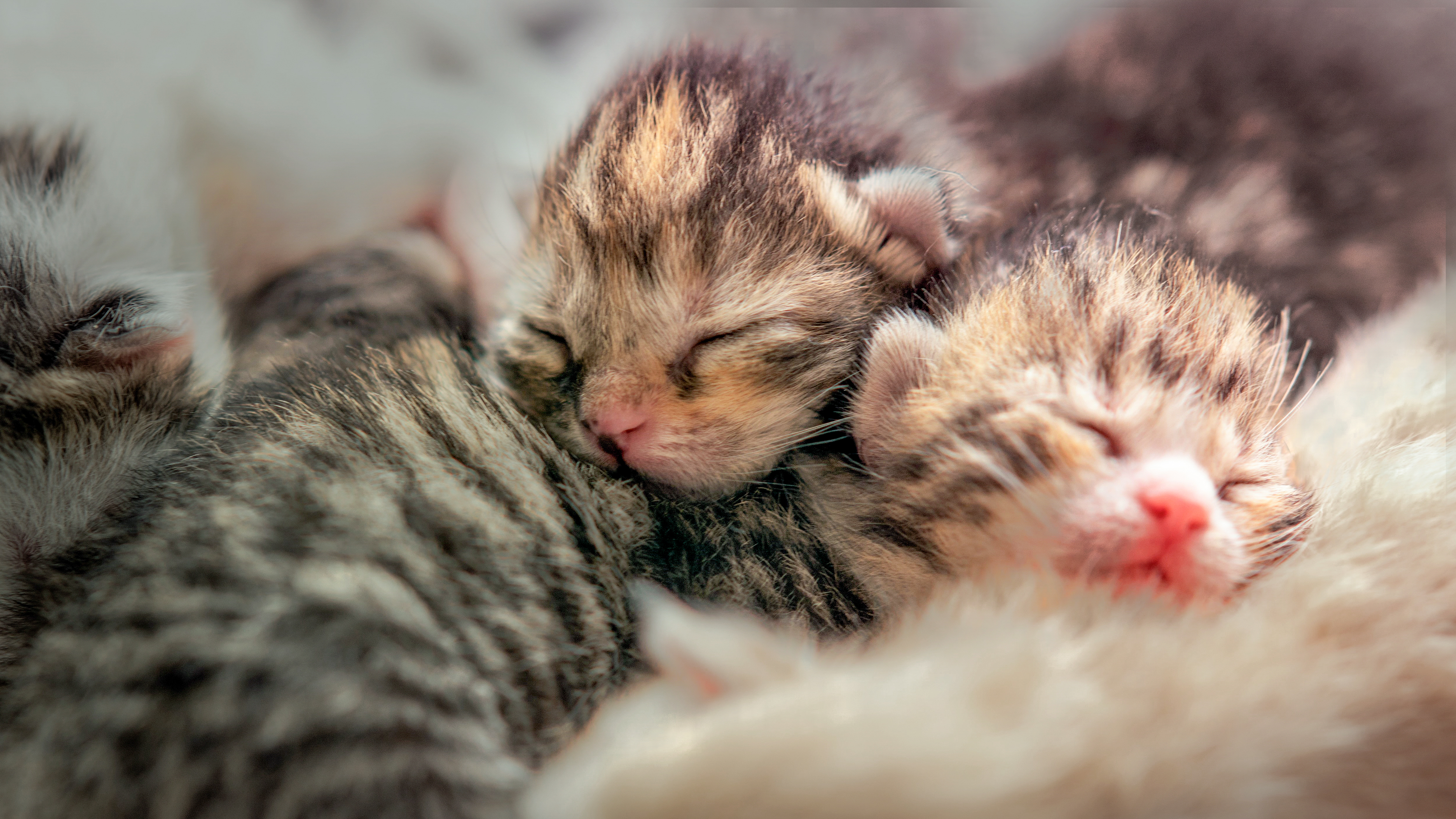 Newborn kittens lying down together