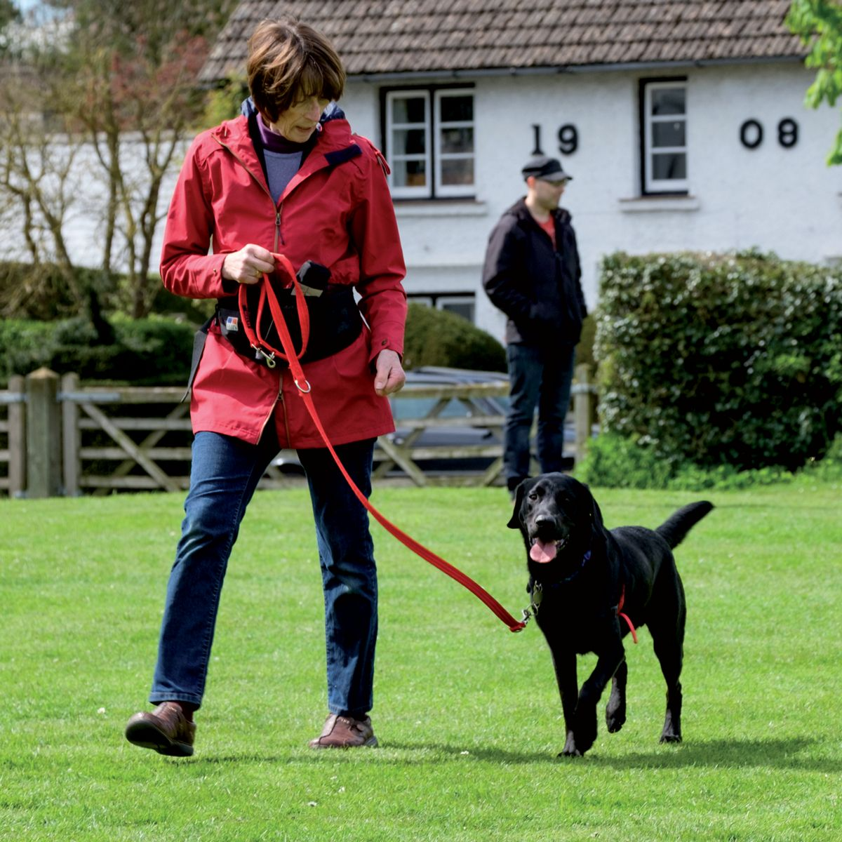 Correct position for loose-lead walking training; only walk forwards when the dog is at your side and the leash is loose.