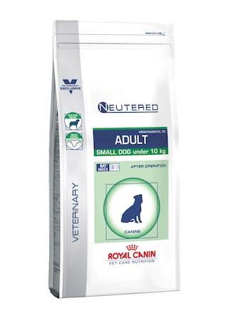 Neutered Adult Small Dog