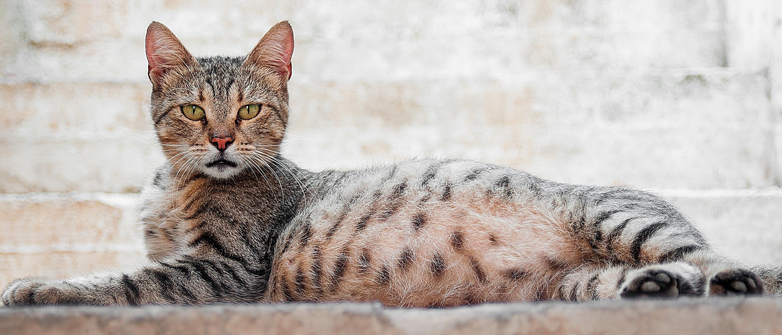 Feeding Your Kitten Helpful Kitten Feeding Schedules And Charts Kitten Food Feeding Kittens Cat Nutrition