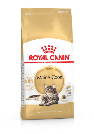 Maine Coon Adult