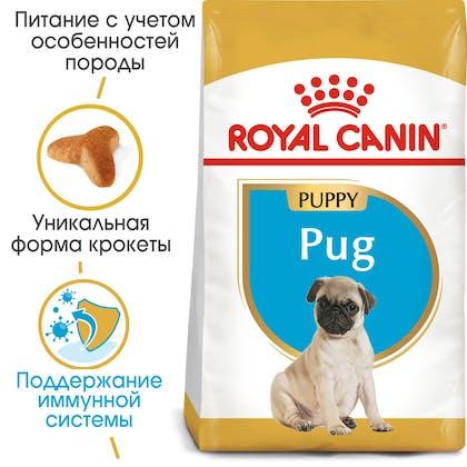 HI_BHN_PUG_PUPPY_ru_4