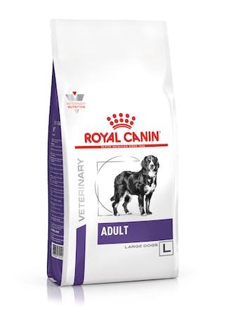 Adult Large Dog