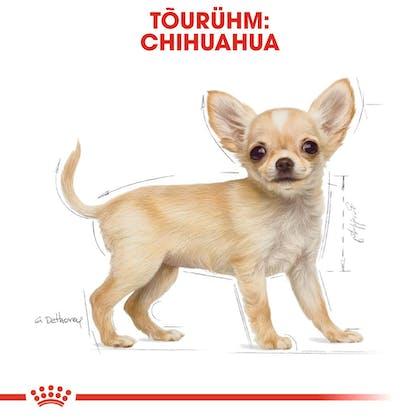 RC-BHN-PuppyChihuahua-CM-EretailKit-4-et_EE