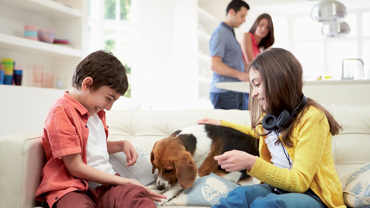 The child-animal bond