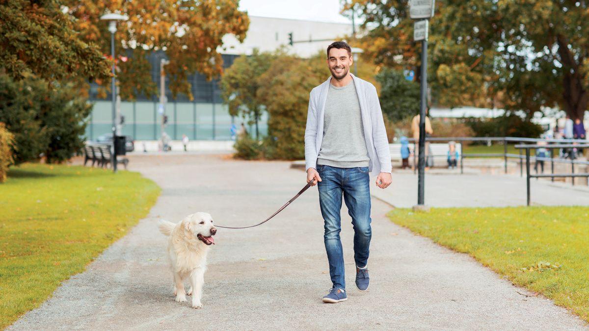 Pasear al perro – salud y bienestar